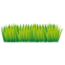 Green Tall Grass Icon, Vector ...