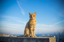 Beautiful Cat Sitting On The Rock At Marjan Park In Split, Croatia. Selective Focus