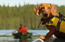 Dog Control Lake Boat Trip.