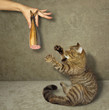 The man is holding a fish sausage. A cat wants to eat it.