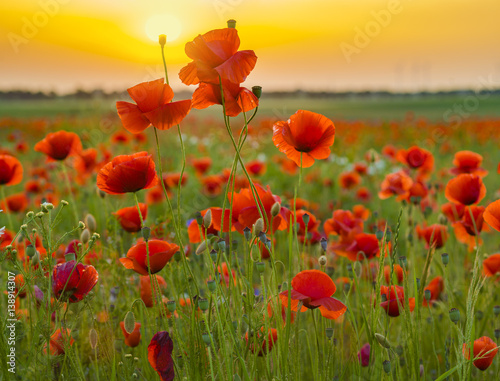 sunset over poppy meadow - 138914307