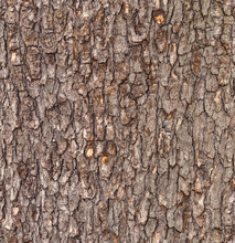 Seamless Old Tree Bark Backgro...