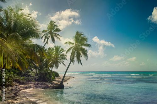 Spoed Foto op Canvas Eiland Beach with coconut palm, uninhabited tropical island