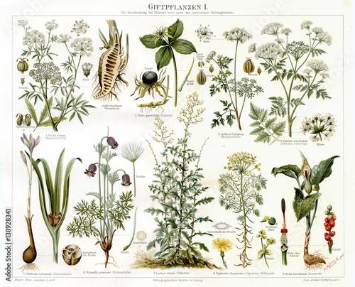 Cuadros en Lienzo Poisonous plants I (from Meyers Lexikon, 1895, 7/568/569)