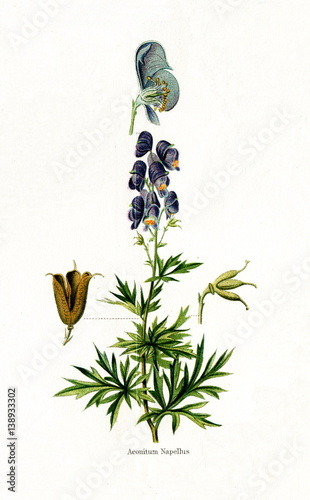 Aconite (Aconitum napellus) (from Meyers Lexikon, 1895, 7/568/569) Wallpaper Mural