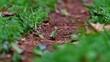 closeup of leaf-cutter ants in nature