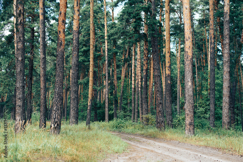 Spoed Foto op Canvas Weg in bos Road in the pine forest