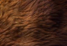 Wavy Animal Fur