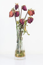Withered Roses In Vases