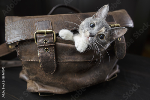 Funny kitten sitting in an old leather bag with a sad look and do not want to le Wallpaper Mural