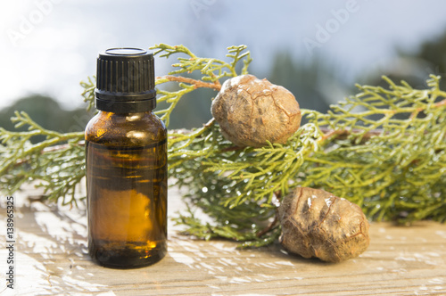 Fotografiet  Cypress oil bottle and plant (Cupressus sempervirens)