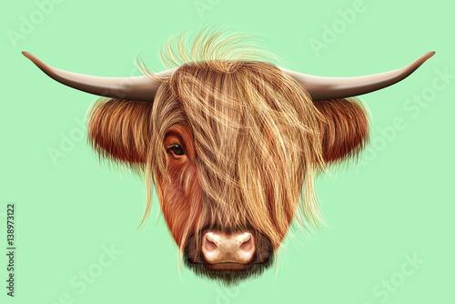 Fototapeta Illustrated portrait of Highland cattle obraz