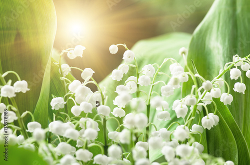 Poster Lelietje van dalen Flower lily of the valley, closeup, spring