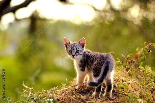 Fotografie, Obraz Katze blickt zurück