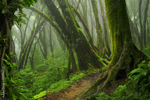 La pose en embrasure Jungle Deep tropical jungles of Southeast Asia in august