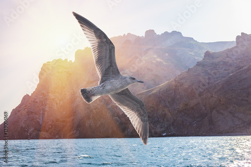 Fotomural Albatross bird flight in sunny sky on ridge of rocks