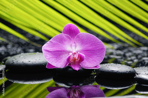 Papiers peints Spa Pink orchid and palm on wet black stones