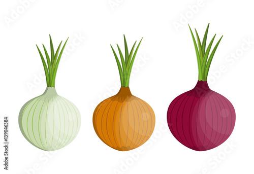 Pinturas sobre lienzo  set Fresh Vegetable Onion isolated icon