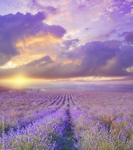 Foto auf Gartenposter Landschappen Beautiful image of lavender field over summer sunset landscape.