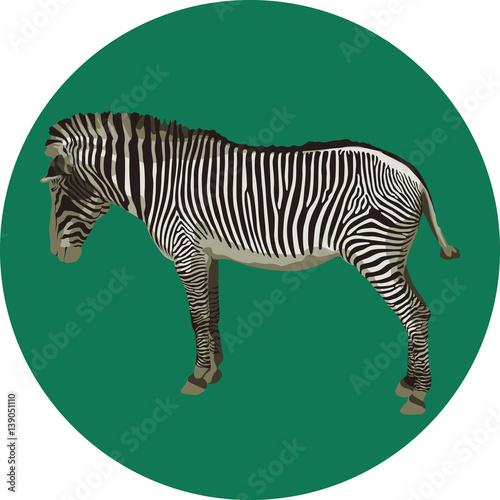 Poster Rhino Zebra