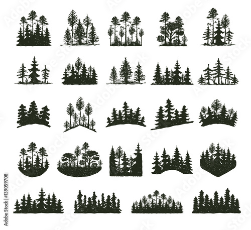 Fotomural Tree outdoor travel black silhouette coniferous natural badges, tops pine spruce branch cedar and plant leaf abstract stem drawing vector illustration