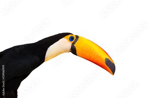 In de dag Toekan Toucan