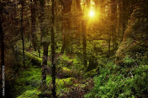 Fototapeten Wald Dark forest at sunset