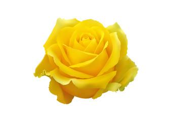 Rosa gialla tridimensionale vettoriale realistica