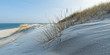 Panorama Strandhafer auf Sanddüne am Ellenbogen auf Sylt