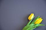 żółte tulipany na czarnym tle