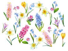 Spring Flowers. Garden. Watercolor.