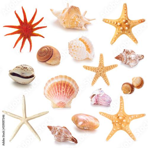 Obraz na plátně  Collection of seashells.