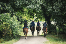 Rear View Of A Four Riders On Brown Horses Riding Along A Path.
