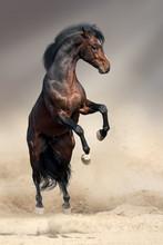 Bay Horse Rearing Up In Desert...