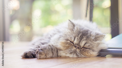 Photo  gray striped Persian cat sleeping on a desk, soft focus.
