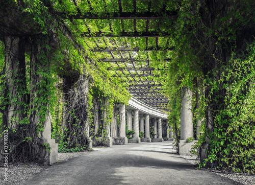 Fototapeta Pergola  pergola-we-wroclawiu-zielona-perspektywa