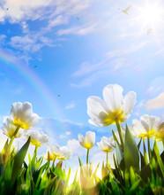 Art Spring Tulip Flower On Blue Sky Background; Happy Easter Day