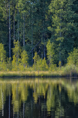 Foto op Aluminium Bos rivier Forest near the water and reflection.