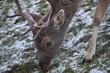 Hirsch Reh Bock Jagd Wild Winter