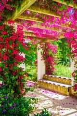Fototapetaterrace with flowering bushes