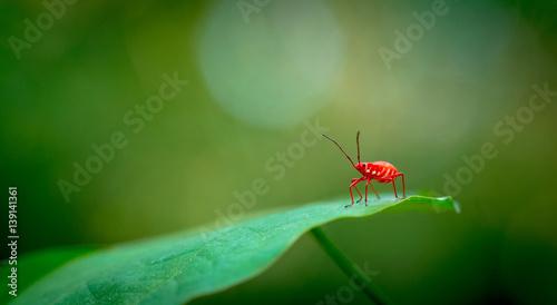 Recess Fitting Macro photography Red bug macro