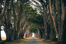 Treelined Avenue