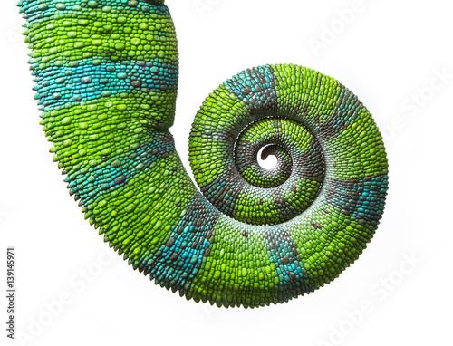 Chameleon spiral tail, Panther chameleon, Furcifer pardalis Ambilobe Wall mural