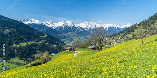 Poster Alpen Frühling in den Alpen