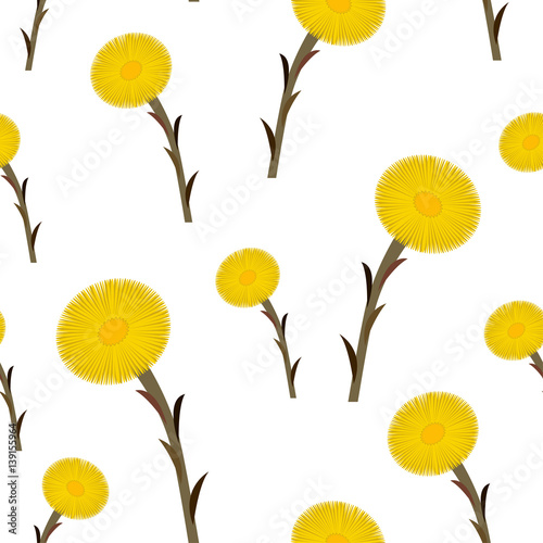 Seamless pattern coltsfoot flowers, vector Tapéta, Fotótapéta