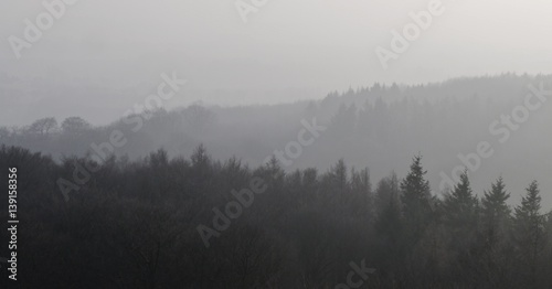 Fototapeten Wald Nebel über dem Wald auf Rügen am Jagdschloss Granitz