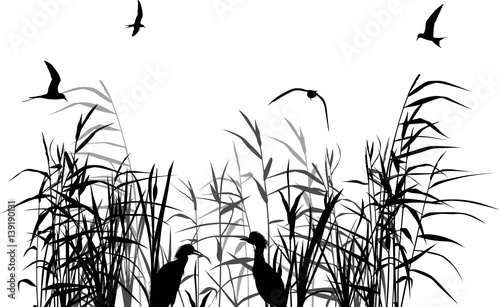 Fototapeta heron between black and grey reed silhouettes isolated on white obraz na płótnie