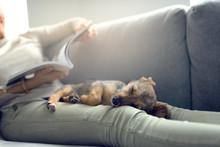 Hundewelpe Schläft Im Schoß ...