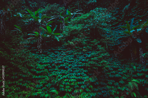 Foto  tropical rain forest, green wall background