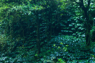 Fototapeta Do sypialni tropical rain forest, green wall background